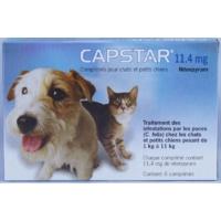 capstar pour chats