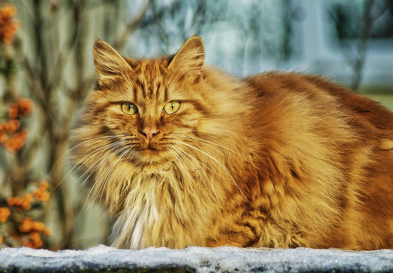Produits vétérinaires hygiène et soins du chat