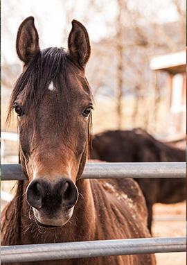 Compléments alimentaires & Produits vétérinaires de locomotion du cheval