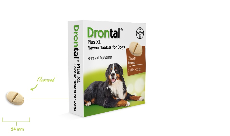 DRONTAL P XL CHIEN 2 tablettes