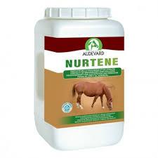 nurtene chevaux