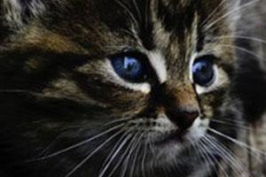 Produits de santé & d'hygiène vétérinaires chats
