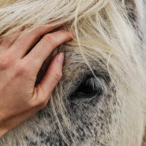 Produits vétérinaires Anti-insectes chevaux