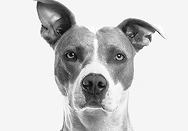 Articulations et mobilité du chien