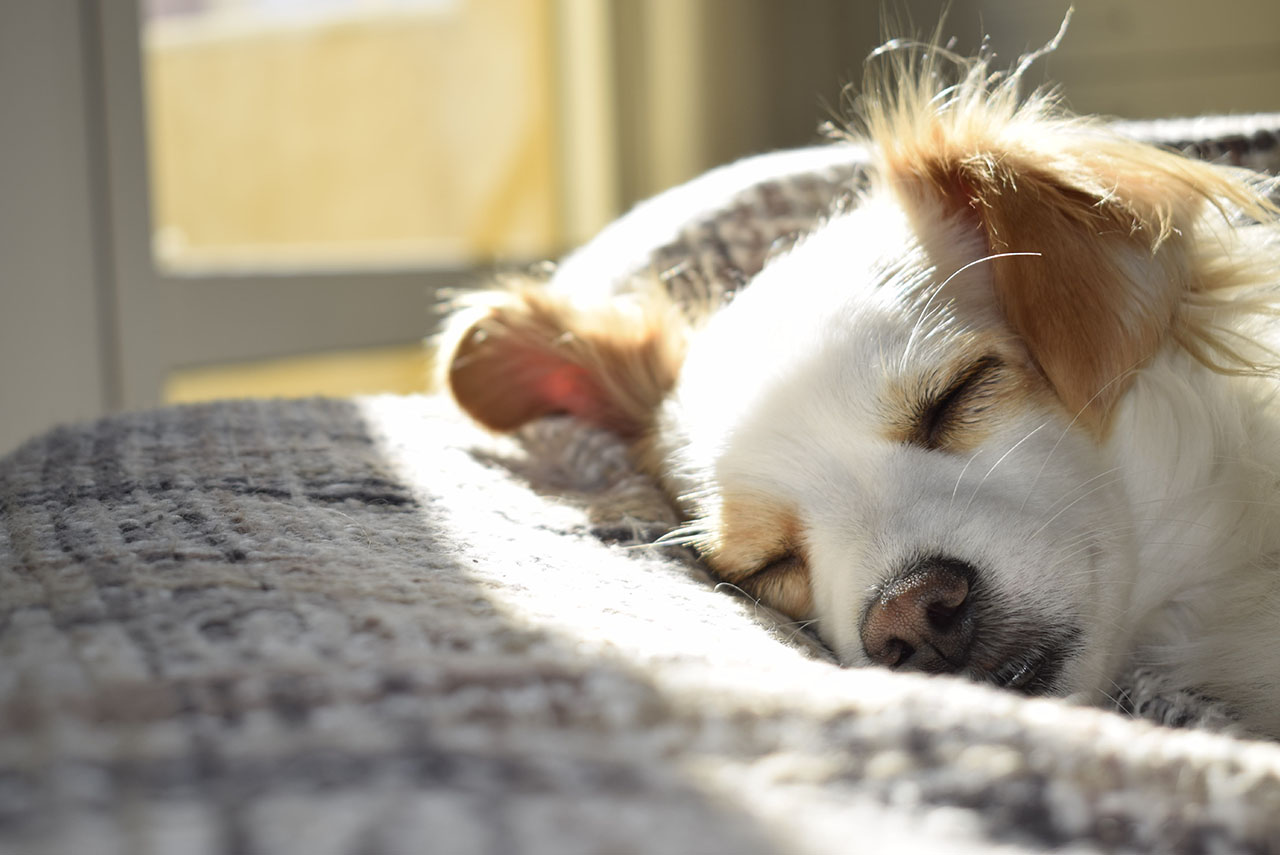 Colliers anti puces et anti tiques pour chiens