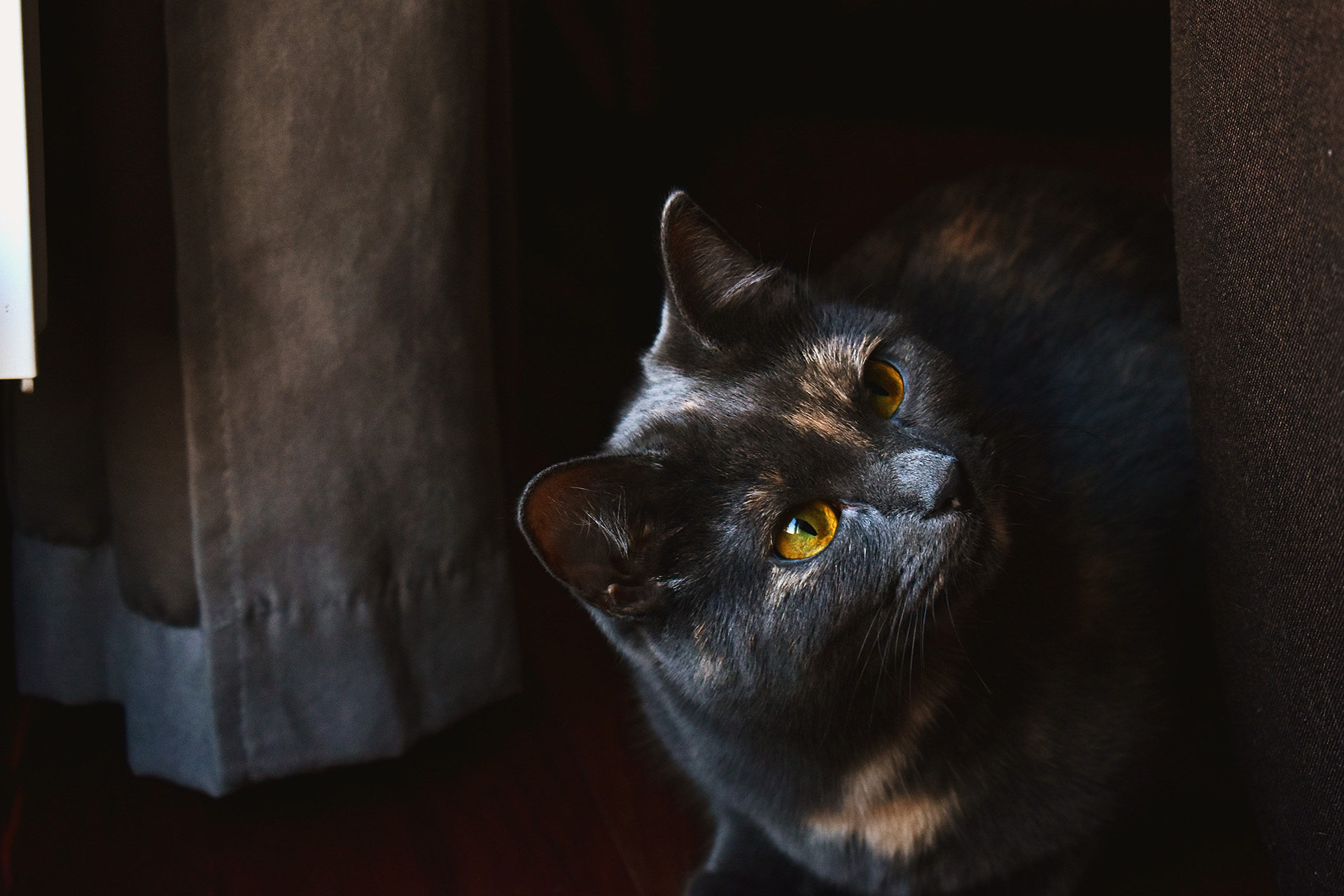 Compléments alimentaires arthrose du chat