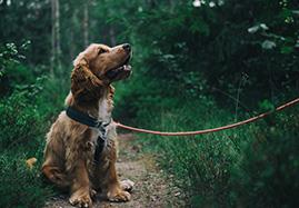 Croquettes pour chien moyen