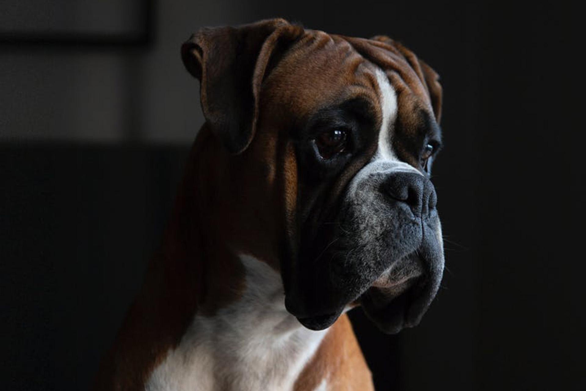 Croquettes chiens Sénior
