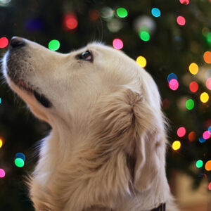 Croquettes Dermatologie du chien