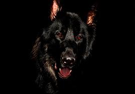 Croquettes de marques pour grand chien à petit prix