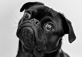 Croquettes pour petit chien