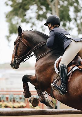 Produits vétérinaires et compléments alimentaires digestion du cheval