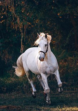 Compléments alimentaires Forme et bien-être du cheval