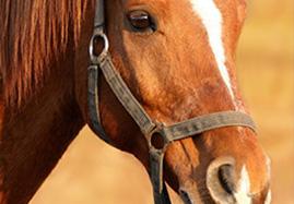 Produits vétérinaires d'hygiène et de soin du cheval
