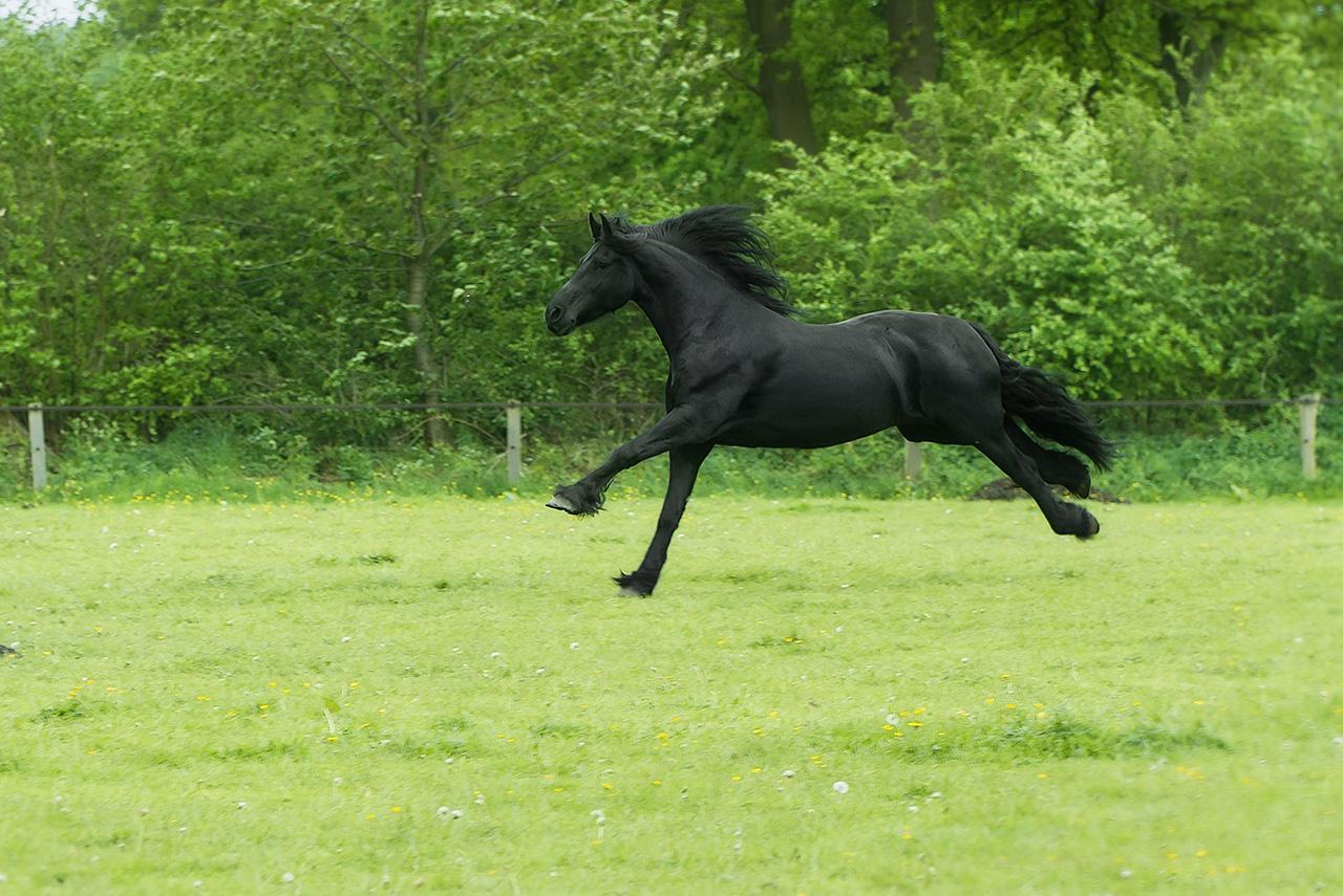Produits vétérinaires d'Hygiène et de toilettage du cheval