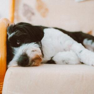 Produits vétérinaires Pattes et coussinets du chien