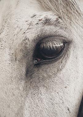 Compléments alimentaires performance cheval ou étalon
