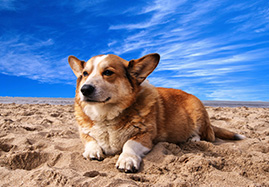 Compléments pour la peau et le pelage du chien
