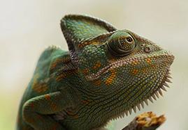Produits et médicaments vétérinaires pour Reptiles