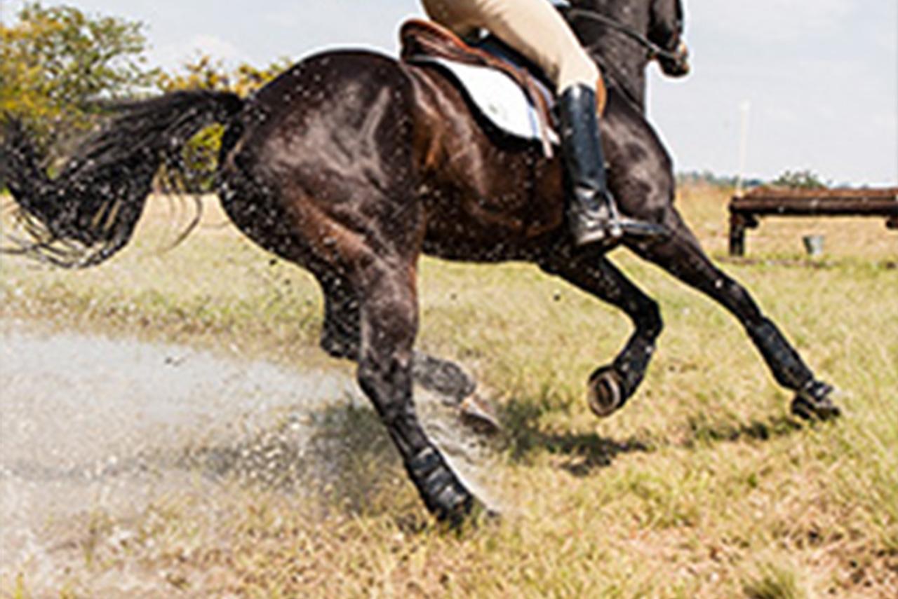 Produits vétérinaires de soins des pieds du cheval dont onguents