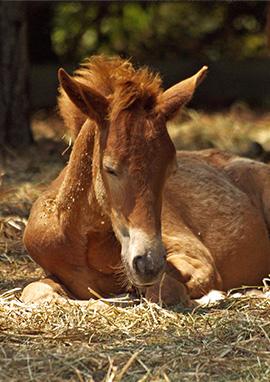 Produits vétérinaires et compléments alimentaires récupération du cheval