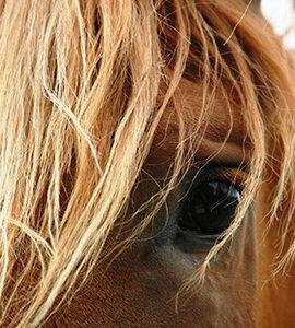 Compléments alimentaires & Produits vétérinaires respiration du cheval
