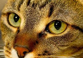 Produits de Soins des Yeux du chat