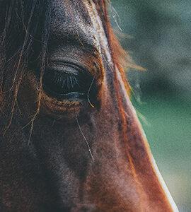Stress et comportement du cheval