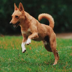Tires-tiques pour chiens