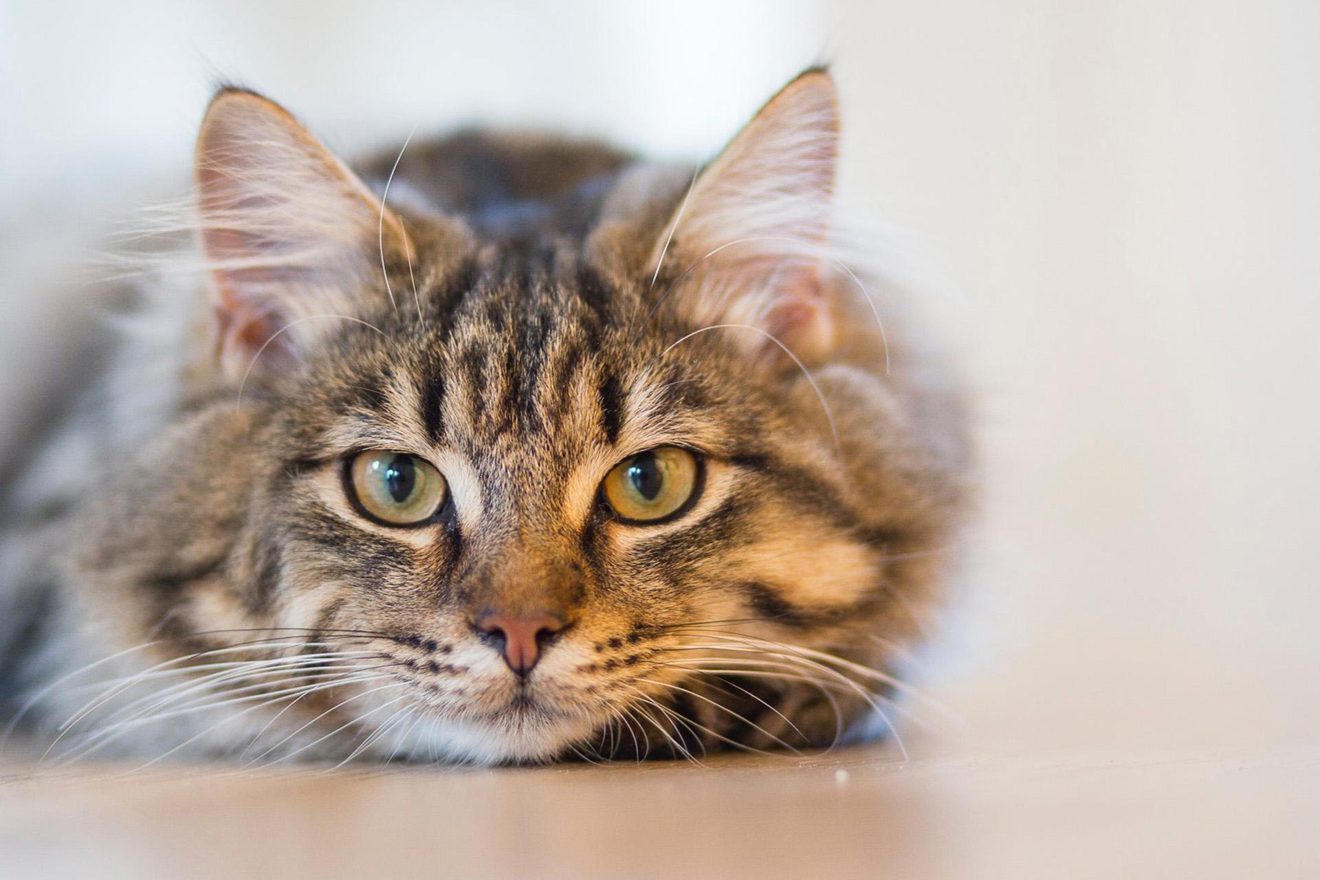 Tires-tiques pour chats