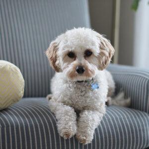 Vermifuges en Comprimés pour chiens et chiots