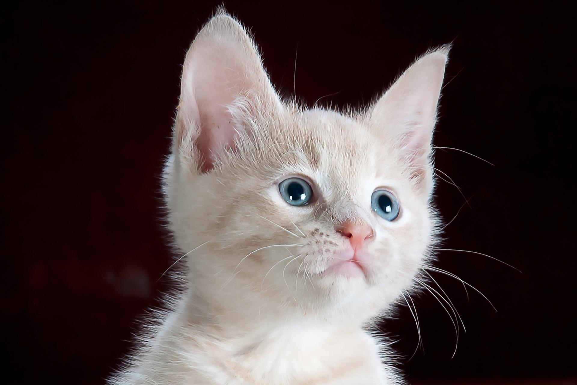 Comprimés Vermifuges chat