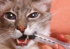 Sélection de vermifuges pour chat