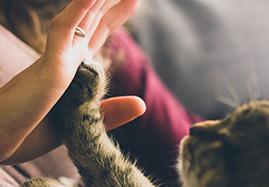 Croquettes thérapeutiques pour chat